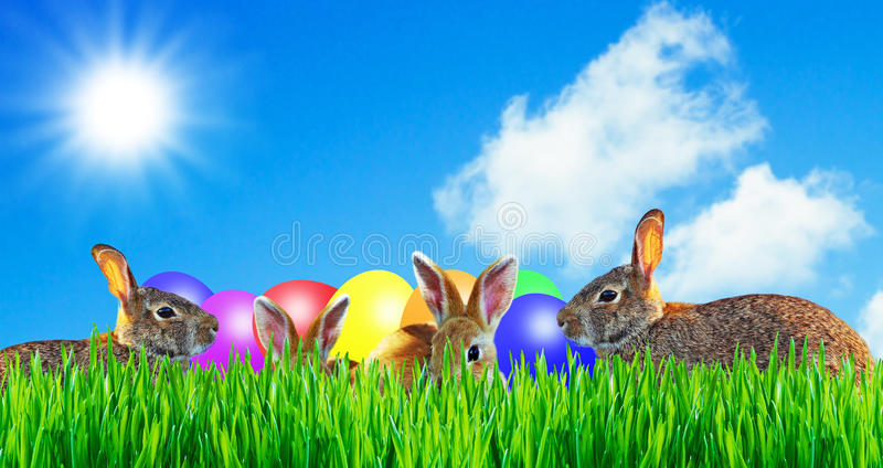 Coniglio felice di pasqua con le uova del easte fotografia stock libera da diritti