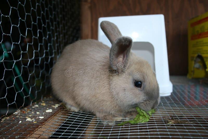 Coniglio in gabbia 3 immagini stock libere da diritti