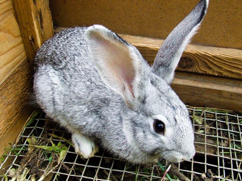 Coniglio in gabbia fotografia stock libera da diritti