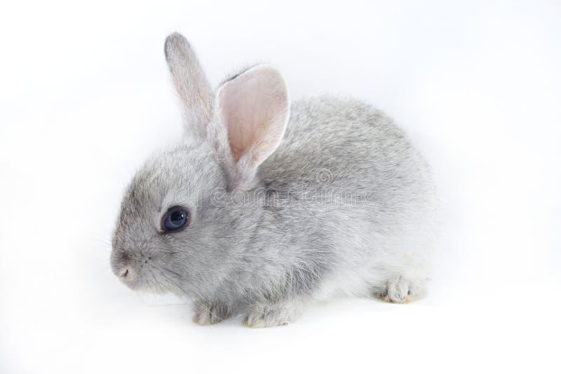 Coniglio grazioso fotografia stock libera da diritti