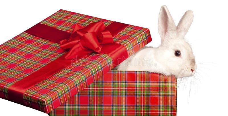 Coniglio lanuginoso nel giftbox fotografie stock