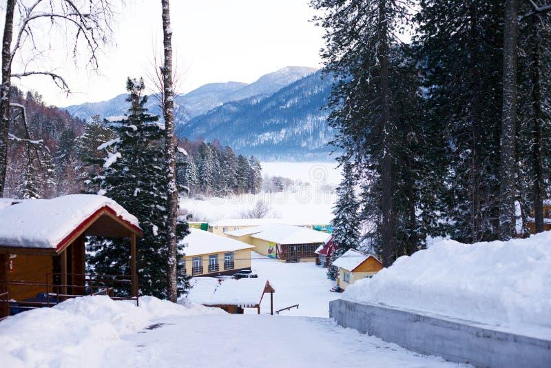 coniglio A lungo eared nelle montagne di Altai fotografie stock libere da diritti