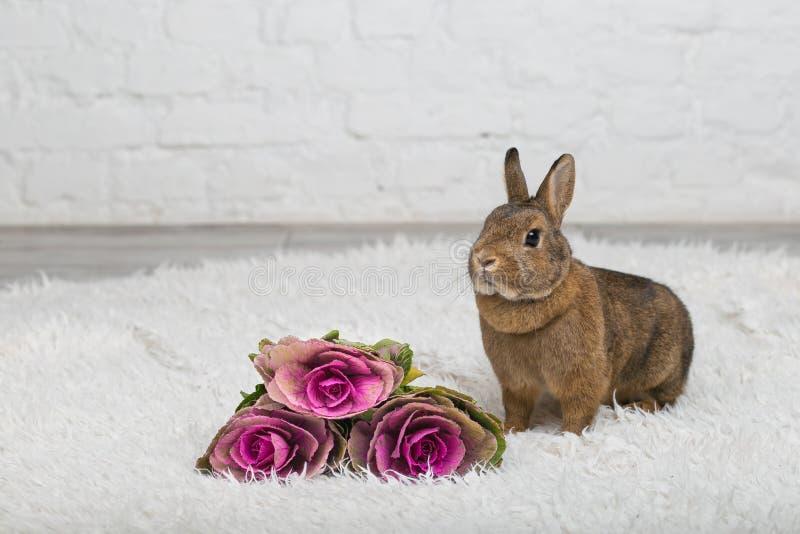 Coniglio marrone sveglio con i fiori fotografia stock