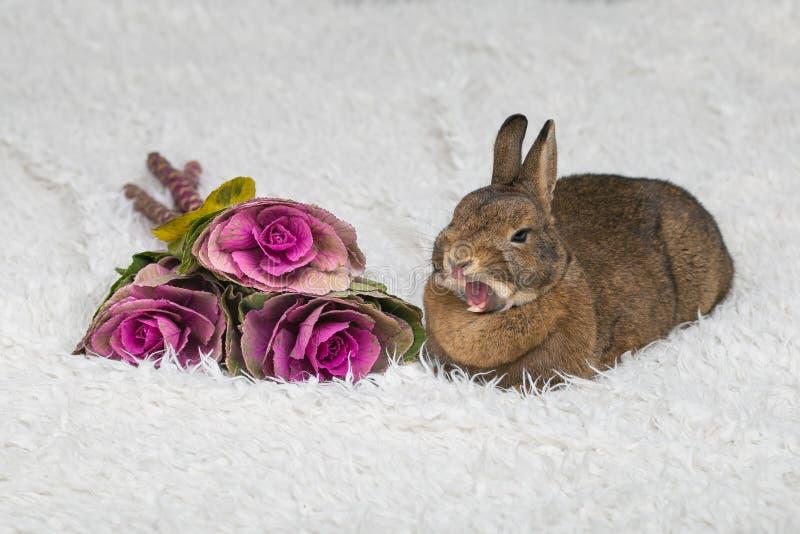 Coniglio marrone sveglio con i fiori fotografia stock libera da diritti