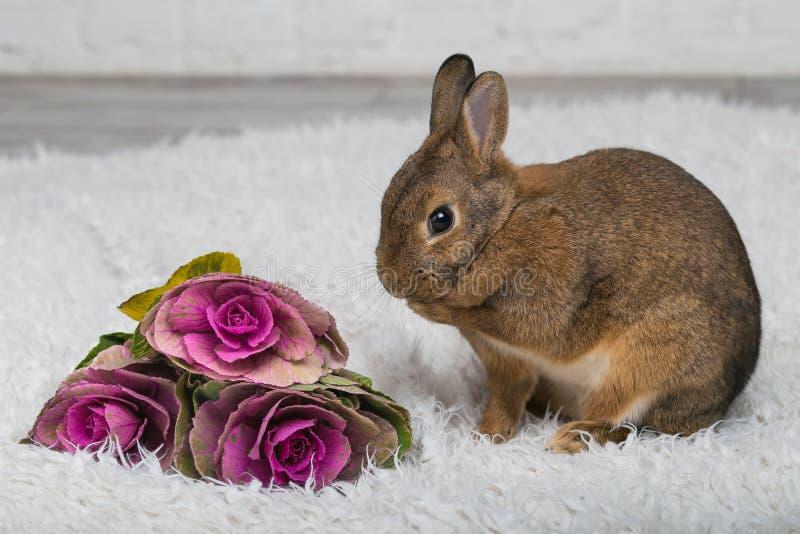 Coniglio marrone sveglio con i fiori immagine stock libera da diritti