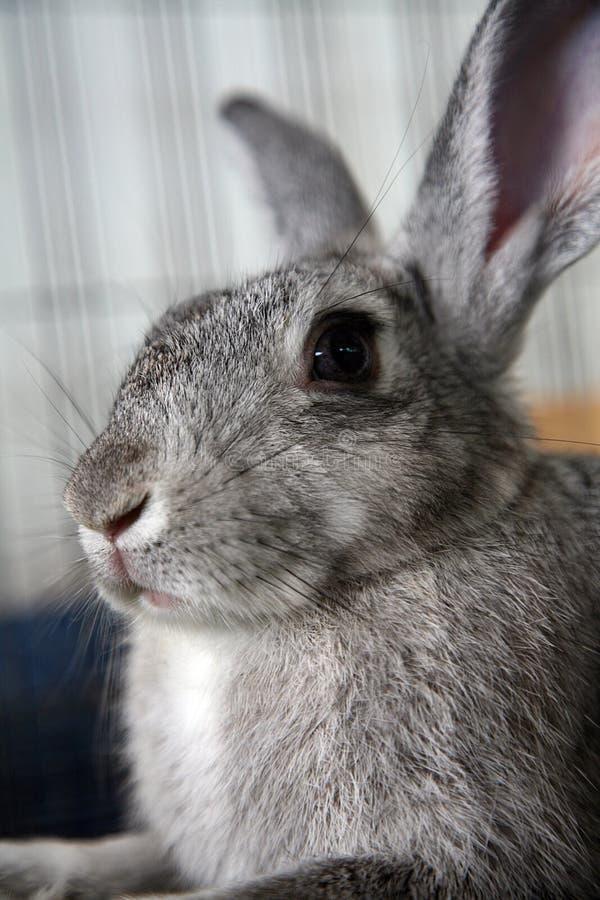 Download Coniglio messo in gabbia fotografia stock. Immagine di lepri - 3889894