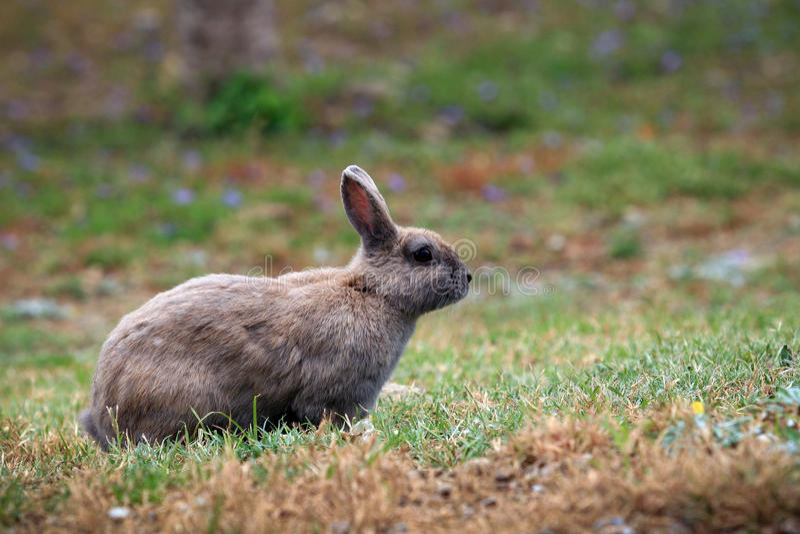 Coniglio nel parco della città immagini stock libere da diritti