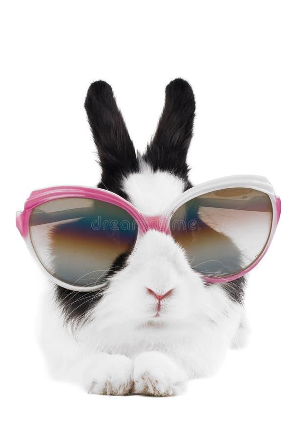 Coniglio in occhiali da sole isolati immagini stock