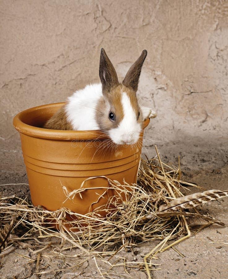 Coniglio simile a pelliccia in flowerpot rustico fotografie stock libere da diritti