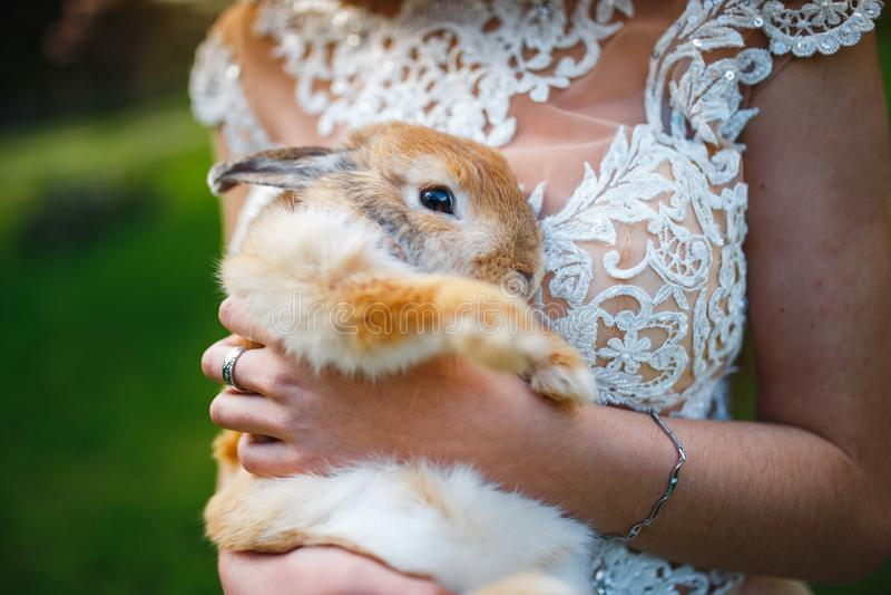 Coniglio simile a pelliccia nelle mani di una ragazza in un vestito bianco immagine stock