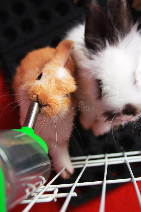 Coniglio: Speranza fotografie stock
