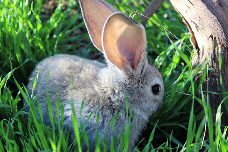 Coniglio sveglio fotografie stock libere da diritti