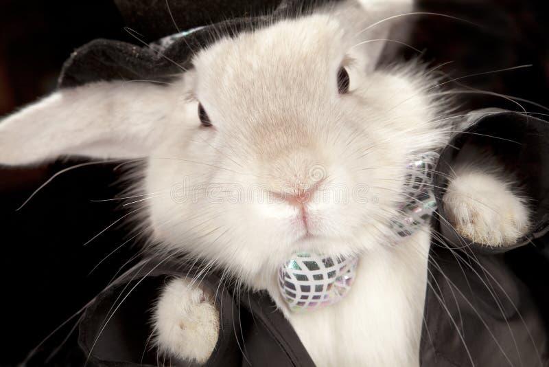 Coniglio sveglio in cappello superiore e nel bowtie immagine stock