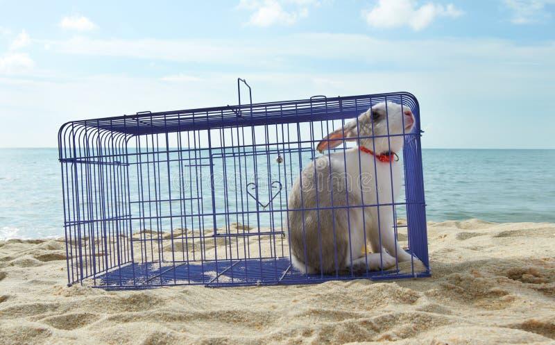 Coniglio in una gabbia del metallo fotografie stock libere da diritti