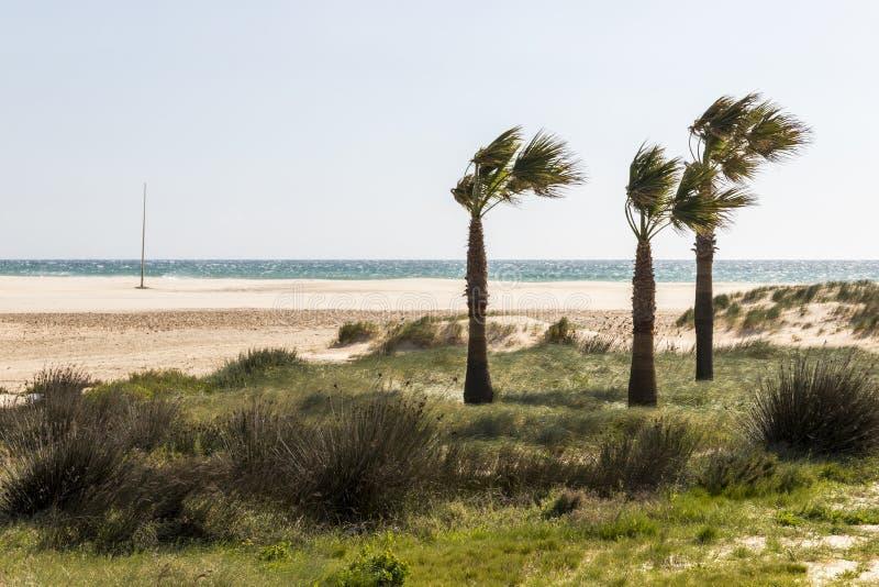 Conil de la Frontera, Spain. Beach at Conil de la Frontera, Spain, one of the White Villages Pueblos Blancos of the Province of Cadiz in Andalucia royalty free stock photos