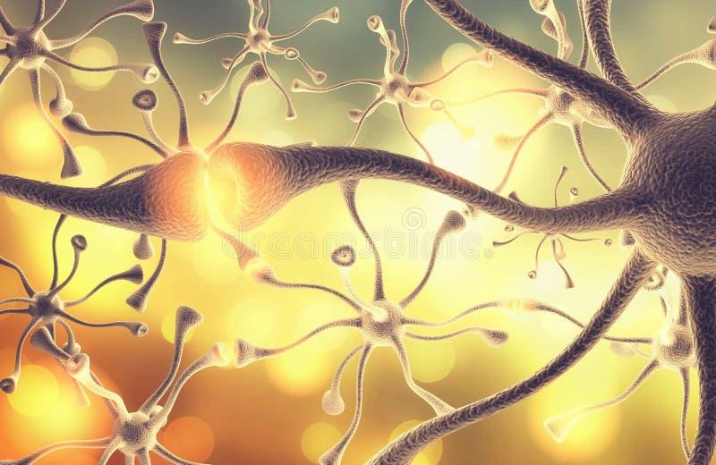 Conjugation of neural nerves of human brain. Conjugation nerves neural medical staff hospital staff yellow human stock photo