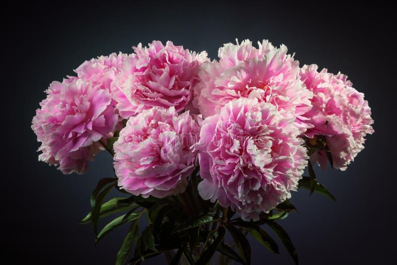 Conjunto cor-de-rosa do ramalhete da peônia foto de stock royalty free