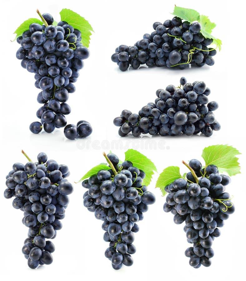 Conjunto da coleção de uva azul isolado fotografia de stock