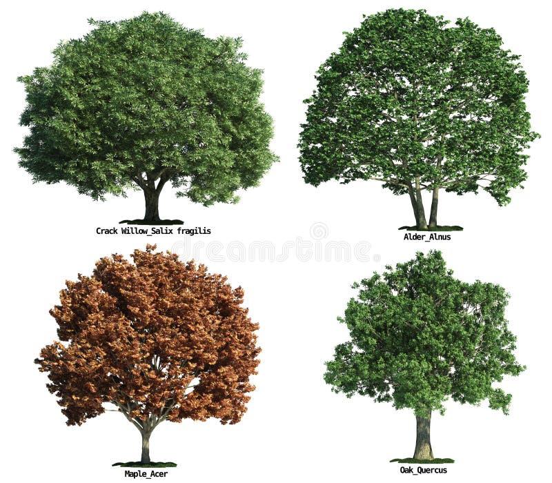 Conjunto de árboles aislados en blanco imágenes de archivo libres de regalías