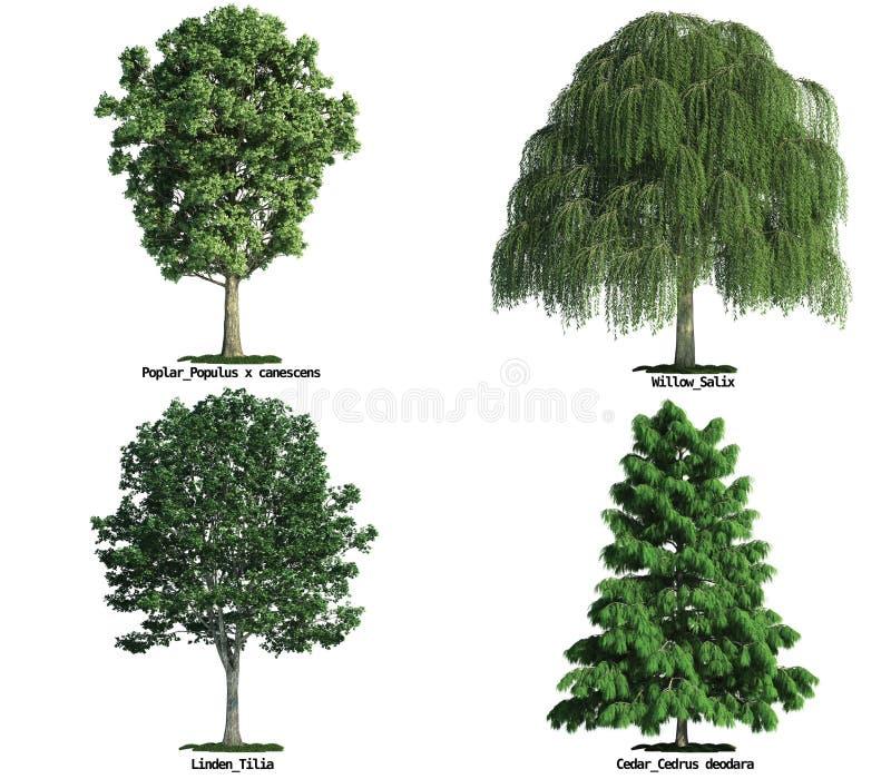 Conjunto de árboles aislados en blanco stock de ilustración