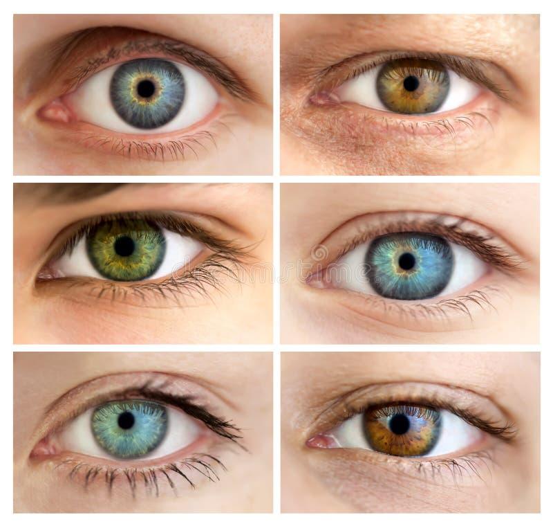 Conjunto de 6 diversos ojos abiertos verdaderos/de la talla enorme imagen de archivo