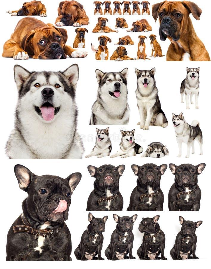 conjunto de cães isolado em branco imagem de stock