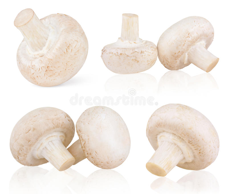 Conjunto de champiñones frescos de la seta imagen de archivo