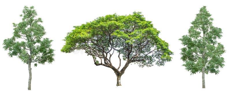 Conjunto de cuatro árboles aislados contra blanco puro imágenes de archivo libres de regalías