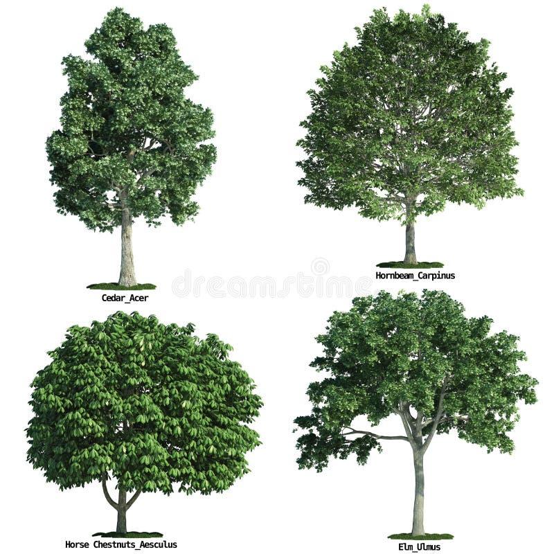 Conjunto de cuatro árboles aislados contra blanco puro stock de ilustración