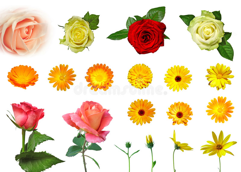 Conjunto de diversas flores aisladas imagen de archivo