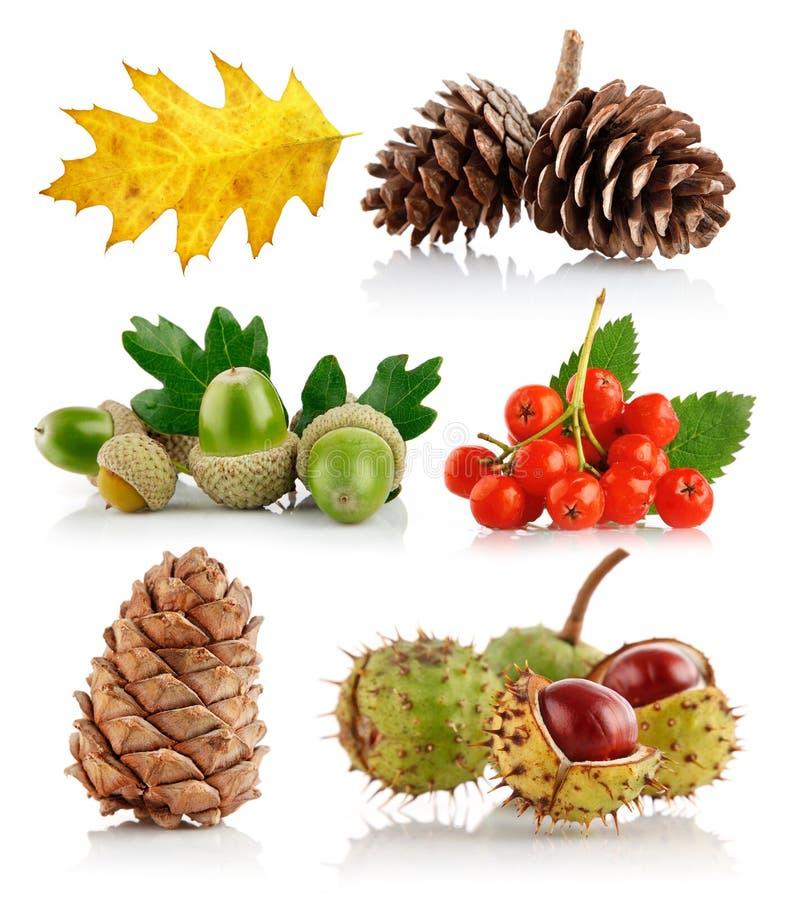 Conjunto de elementos de la naturaleza del otoño fotos de archivo