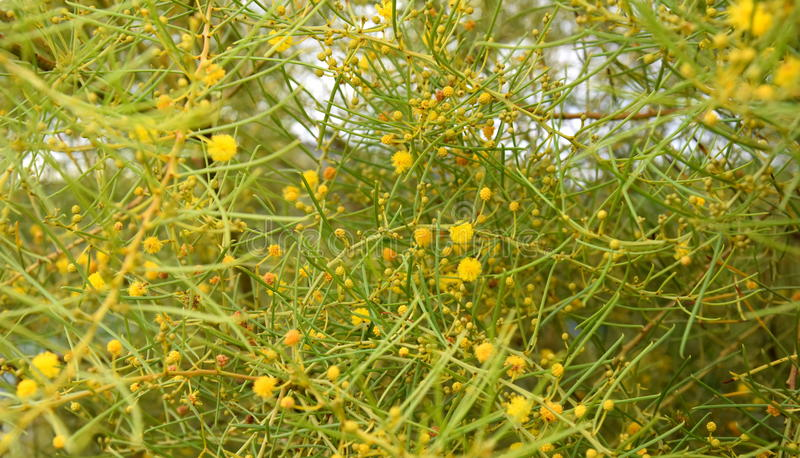 Conjunto de flores e de folhas amarelas imagem de stock royalty free