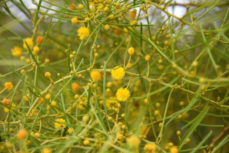 Conjunto de flores e de folhas amarelas fotos de stock