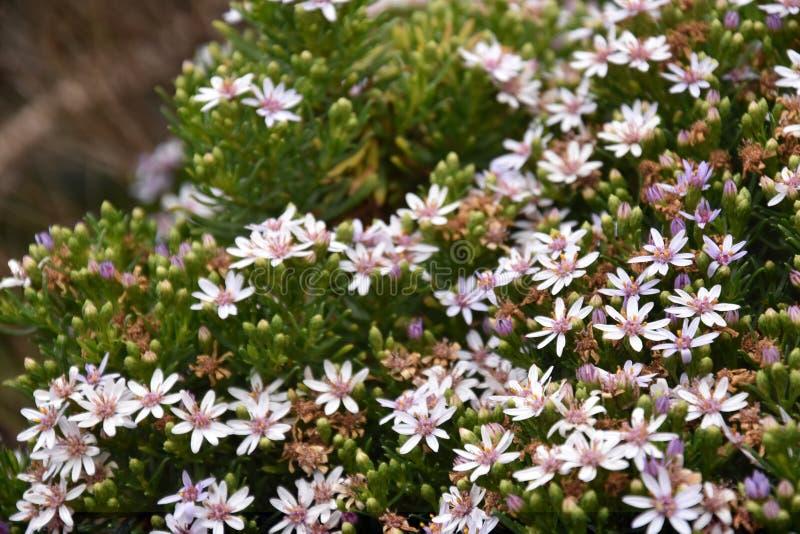 Conjunto de flores selvagens na grande estrada do oceano fotos de stock royalty free