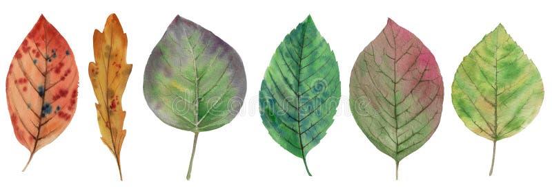 Conjunto de folhas elegantes para design Folhas coloridas do outono ilustração do vetor