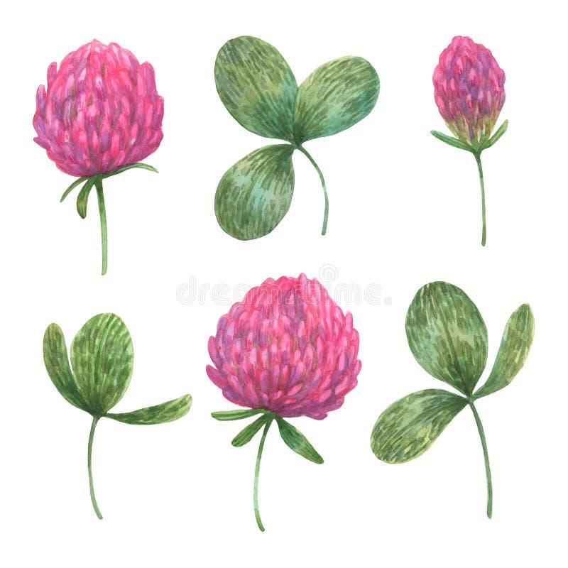 Conjunto de folhas de trevo e flores a aquarela imagens de stock royalty free