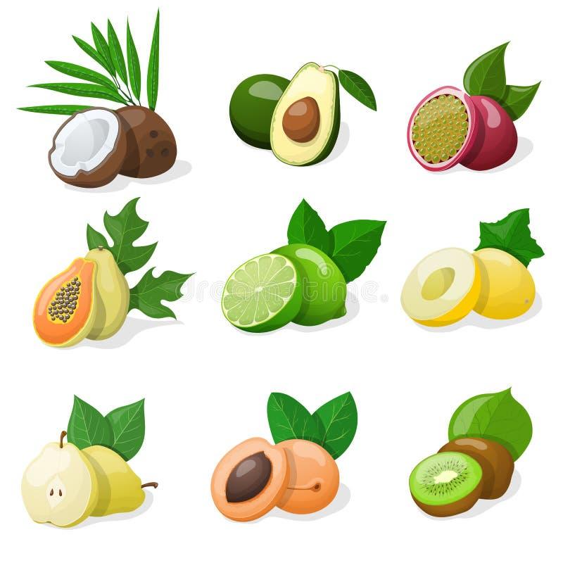 Conjunto de fruta exótica Ilustración del vector ilustración del vector