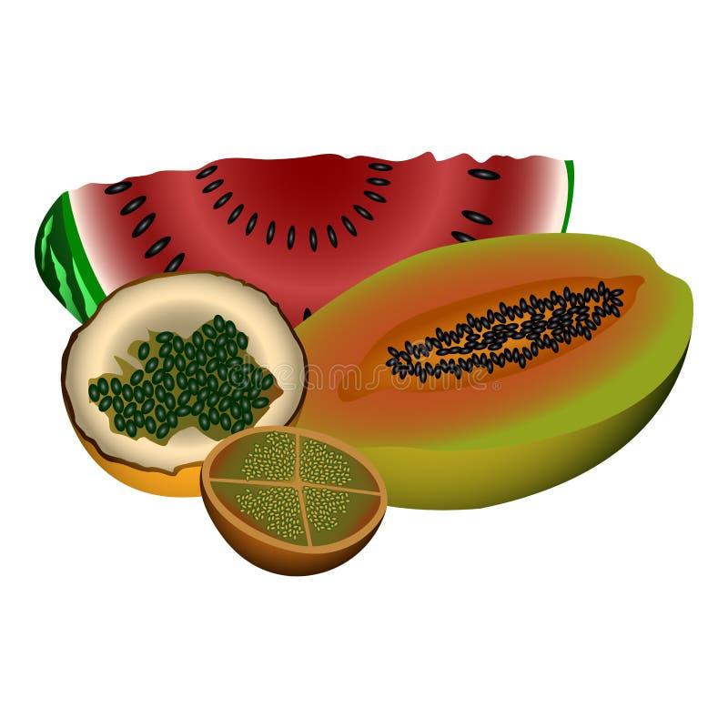 Conjunto de frutas ilustración del vector