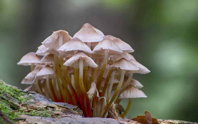 Conjunto de fungos foto de stock royalty free
