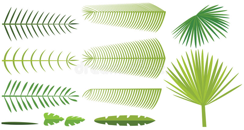 Conjunto de hojas de palma ilustración del vector