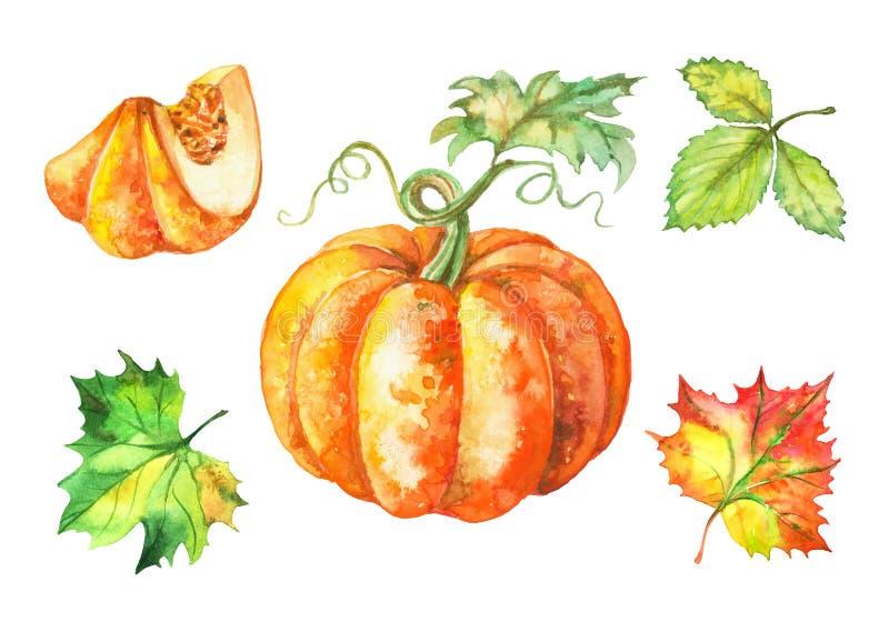 Conjunto de ilustraciones de acuarela. Calabaza y hojas de otoño. Vector ilustración del vector