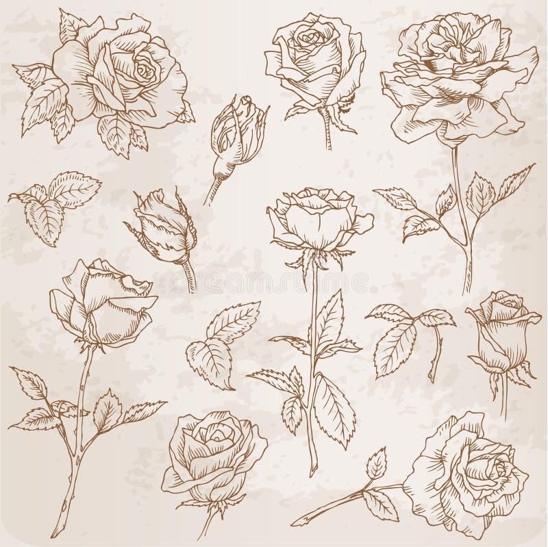 Conjunto de la flor ilustración del vector