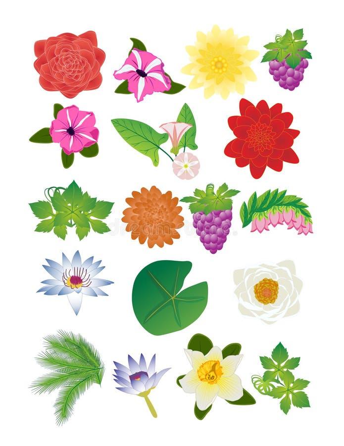 Conjunto de la flor y de baya stock de ilustración