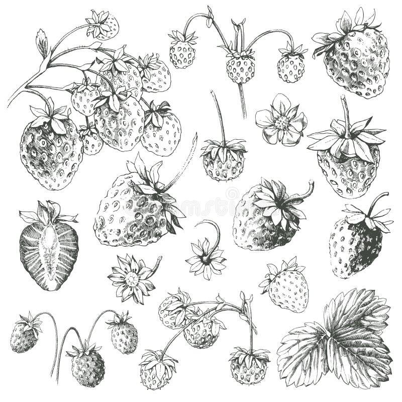 Conjunto de la fresa. ilustración del vector