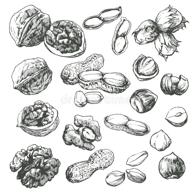 Conjunto de la tuerca. stock de ilustración