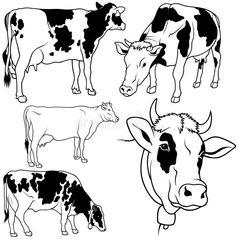 Conjunto de la vaca ilustración del vector