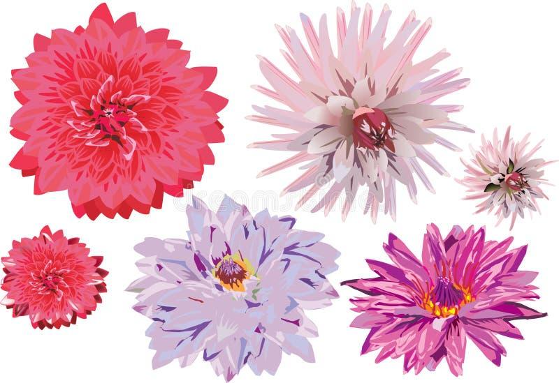Conjunto de las flores de Georgina aisladas en blanco libre illustration