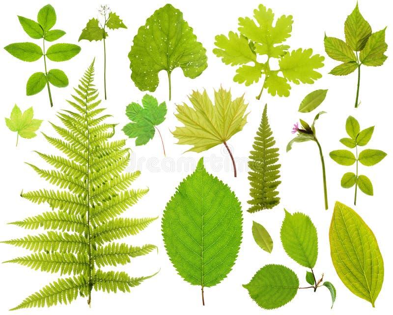 Conjunto de las hojas imagen de archivo