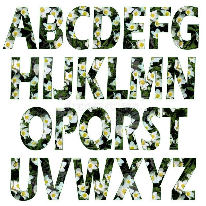 Conjunto de letras texturizadas del alfabeto latino Textura floral natural, apoplejía Flores blancas, hojas verdes en un oscuro foto de archivo