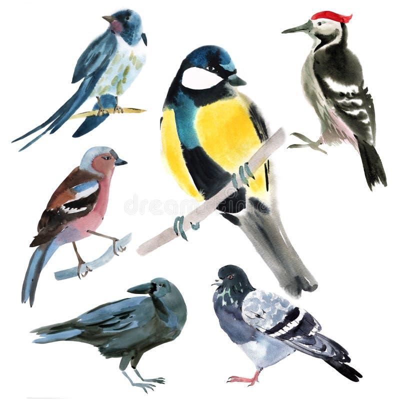 Conjunto de pájaros Ejemplo de la acuarela en el fondo blanco libre illustration